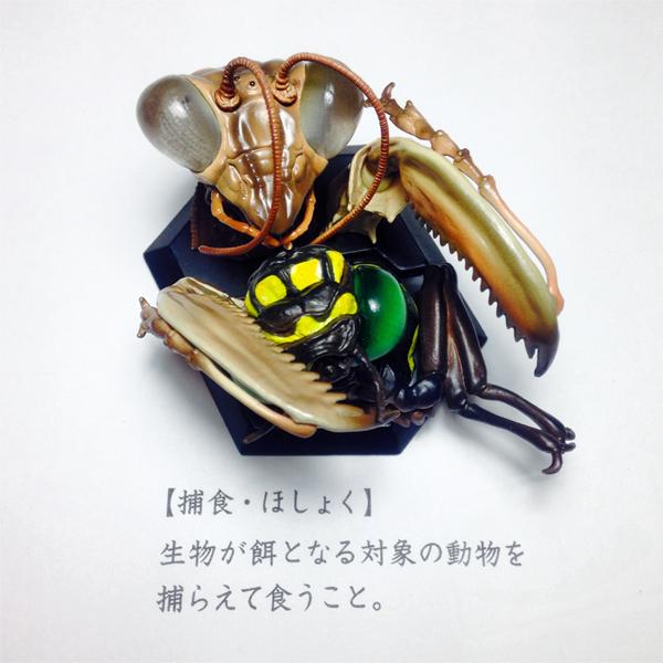 20140604虫600